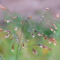 дождь :: Nastya. S
