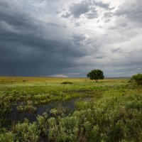 краски лета :: Sergey Baturin