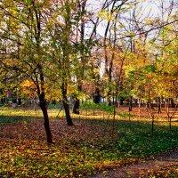 Парк в золотом наряде... :: Тамара (st.tamara)