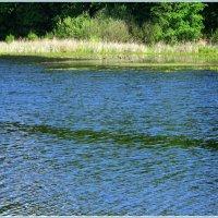 На  голубом озере. :: Валентина ツ ღ✿ღ