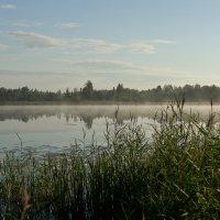 Утренний туман :: Яков Реймер