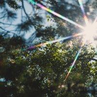 Солнышко лучистое :: Andrey Kondor