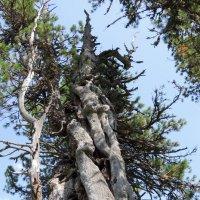 Дерево :: Сергей Карцев