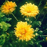 The flowers in your eyes always remained alive.... :: Stephanie Plebeyskaya