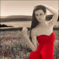 Красный мак :: Олег Науменко