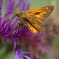 бабочка :: виктория Скрыльникова