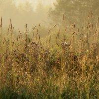 Травы рассветные... :: Юрий Цыплятников