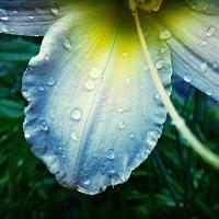 The rain roared ... :: Stephanie Plebeyskaya