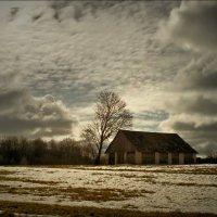 Про одинокое дерево ...... :: Елена Kазак