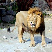 Царь. :: Larisa