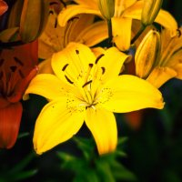 цветик-семицветик :: alexsil22 AAA