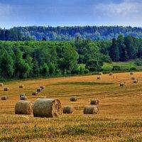 Сбор пшеницы :: Андрей Куприянов