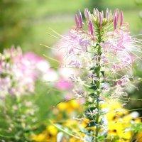 Странной формы цветок :: Андрей Кто