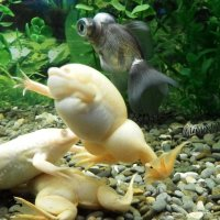 В Алуштинском аквариуме :: Marina Timoveewa