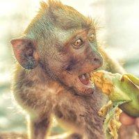 Кормление маленькой обезьянки :: Творческая группа КИВИ