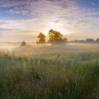 Утро купалось в рассветном тумане-2 :: serg