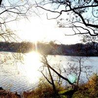 Солнечное утро :: Daria Lebedeva