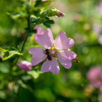 пчелка и пчелка :: Анастасия Садовская
