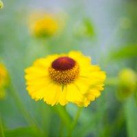 цветок :: Анастасия Садовская