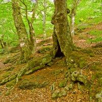 Сказочный лес :: Ирина Рассветная