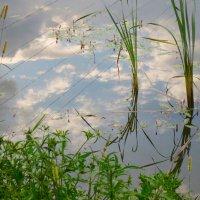 отражение облаков с проводами :: Елена
