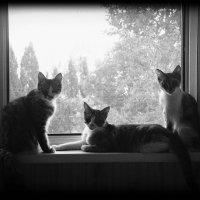 Три сестры :: Елена Даньшина