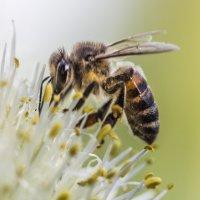 Горький лук - сладкий мед :: Сергей W.Протопопов