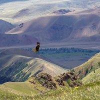 Взгляд на мир с высоты полёта орла :: Сергей Митченко