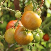 Урожай :: Светлана Дмитриева