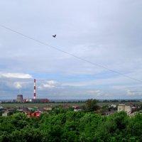 С высоты птичьего полёта... :: Тамара (st.tamara)