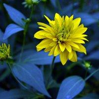 Сине-желтый этюд ... :: Маry ...