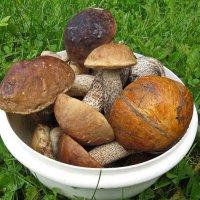 Небольшой лесной урожай грибов. :: Пётр Сесекин