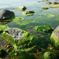травка зеленеет, солнышко блестит)) :: Oxi --