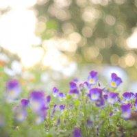 Мои любимые цветочки :: Аннушка Гущина