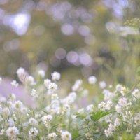 Ещё цветочки :: Аннушка Гущина