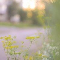 Цветы :: Аннушка Гущина