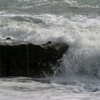 Волна.... :: Валерия  Полещикова