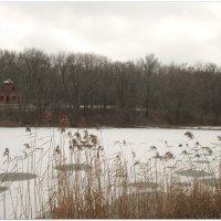 Зимняя акварель... :: Тамара (st.tamara)