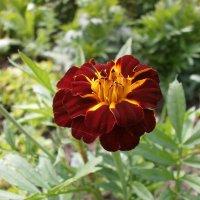 Июль радует красивым цветением. :: Валентина Жукова