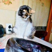 Он не из нашего аквариума !! )) :: Milocs Морозова Людмила