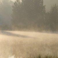 В тумане утреннем.... :: Юрий Цыплятников