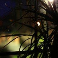 Ночь у окна :: Артем Бардюжа