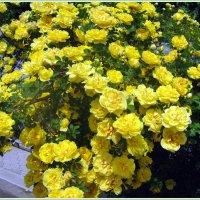 Дарите желтые цветы! :: Валентина ツ ღ✿ღ