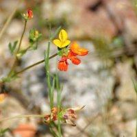 цветы на песке :: linnud