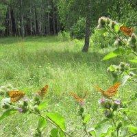 Праздник бабочек. :: Мила Бовкун