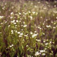 Поле цветов :: Елена Виноградова