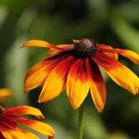 Жаркий цветок :: Маргарита Епишина
