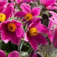 Цветы :: Georg Förderer