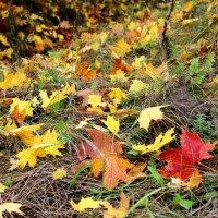 На ковре из желтых листьев..... :: Маргарита ( Марта ) Дрожжина