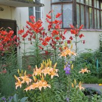 Цветы возле дома. :: Олег Афанасьевич Сергеев